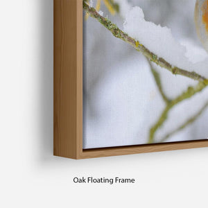 Robin in the Snow Floating Frame Canvas - Canvas Art Rocks - 10