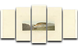 Rocky Mountain Plover by Audubon 5 Split Panel Canvas - Canvas Art Rocks - 1
