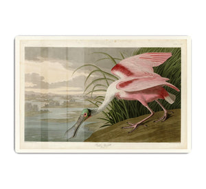 Roseate Spoonbill by Audubon HD Metal Print - Canvas Art Rocks - 1