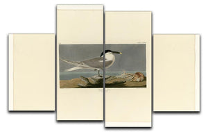 Sandwich Tern by Audubon 4 Split Panel Canvas - Canvas Art Rocks - 1