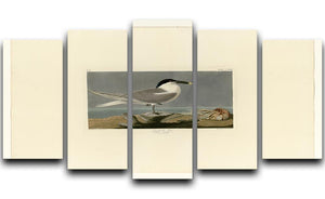 Sandwich Tern by Audubon 5 Split Panel Canvas - Canvas Art Rocks - 1