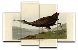 Scolopaceus Courlan by Audubon 4 Split Panel Canvas - Canvas Art Rocks - 1