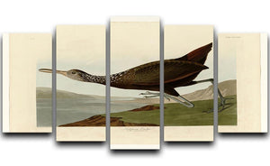 Scolopaceus Courlan by Audubon 5 Split Panel Canvas - Canvas Art Rocks - 1
