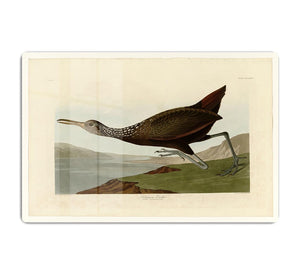 Scolopaceus Courlan by Audubon HD Metal Print - Canvas Art Rocks - 1
