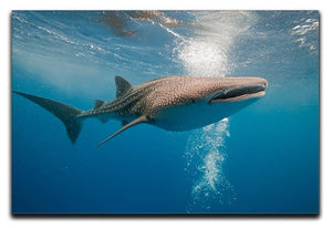 Shark Canvas Print or Poster  - Canvas Art Rocks - 1