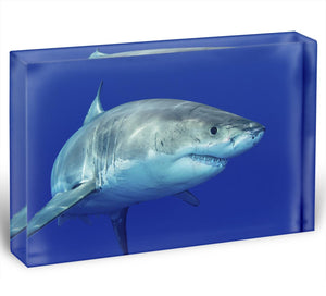Shark swimming looking for food Acrylic Block - Canvas Art Rocks - 1
