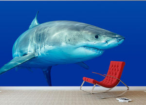 Shark swimming looking for food Wall Mural Wallpaper - Canvas Art Rocks - 3