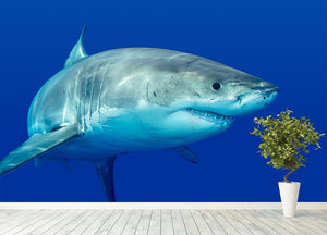 Shark swimming looking for food Wall Mural Wallpaper - Canvas Art Rocks - 4