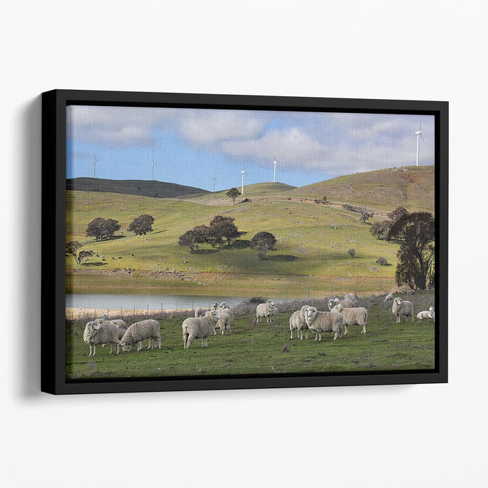 Sheep grazing below the Blayney to Carcoar windfarm Floating Framed Canvas