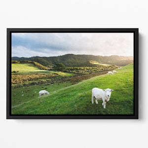 Sheep in farm in New Zealand Floating Framed Canvas - Canvas Art Rocks - 2