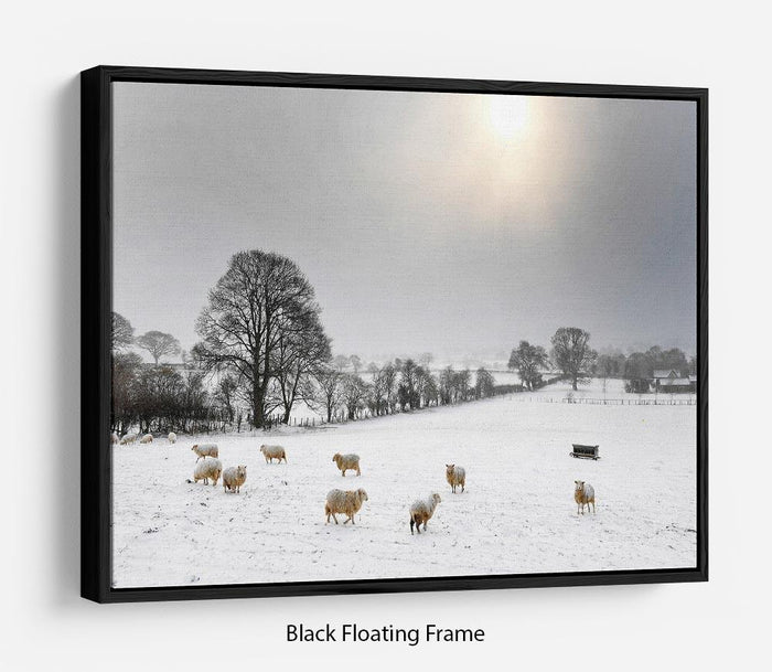 Sheep in the snow Floating Frame Canvas
