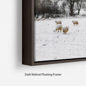 Sheep in the snow Floating Frame Canvas - Canvas Art Rocks - 6