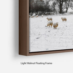Sheep in the snow Floating Frame Canvas - Canvas Art Rocks - 8