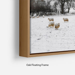 Sheep in the snow Floating Frame Canvas - Canvas Art Rocks - 10