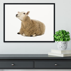 Sheep lying and looking up Framed Print - Canvas Art Rocks - 1
