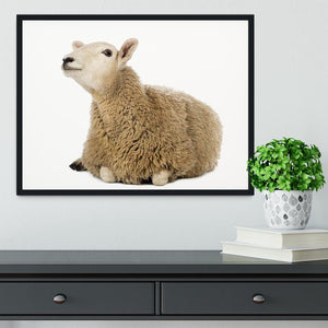Sheep lying and looking up Framed Print - Canvas Art Rocks - 2