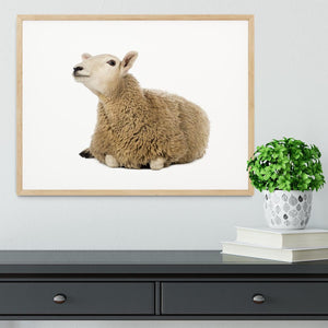 Sheep lying and looking up Framed Print - Canvas Art Rocks - 3