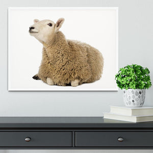 Sheep lying and looking up Framed Print - Canvas Art Rocks -6