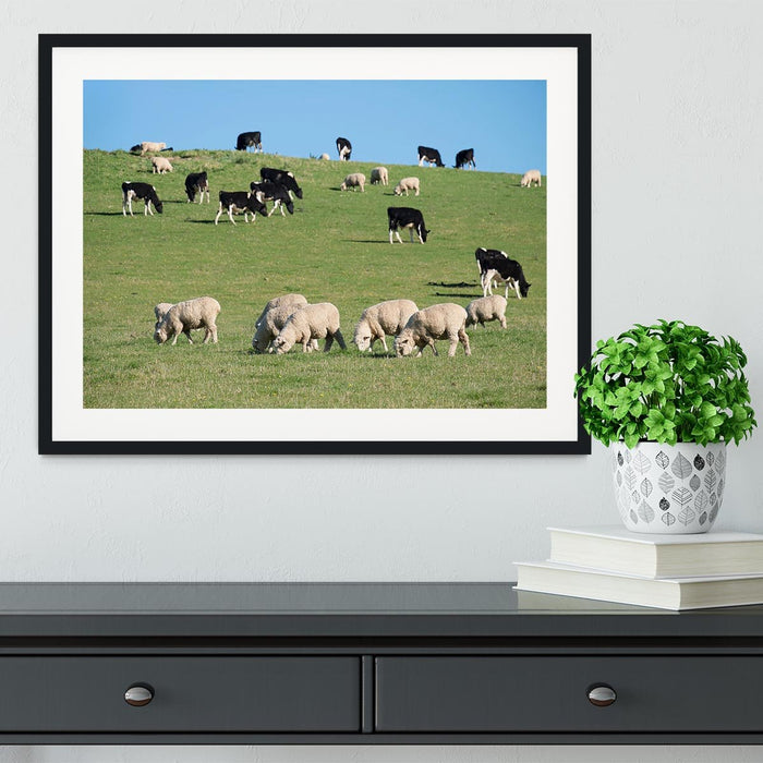 Sheeps in green rural meadow with cows Framed Print
