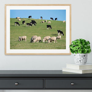 Sheeps in green rural meadow with cows Framed Print - Canvas Art Rocks - 3