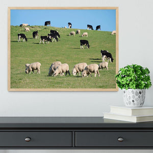 Sheeps in green rural meadow with cows Framed Print - Canvas Art Rocks - 4