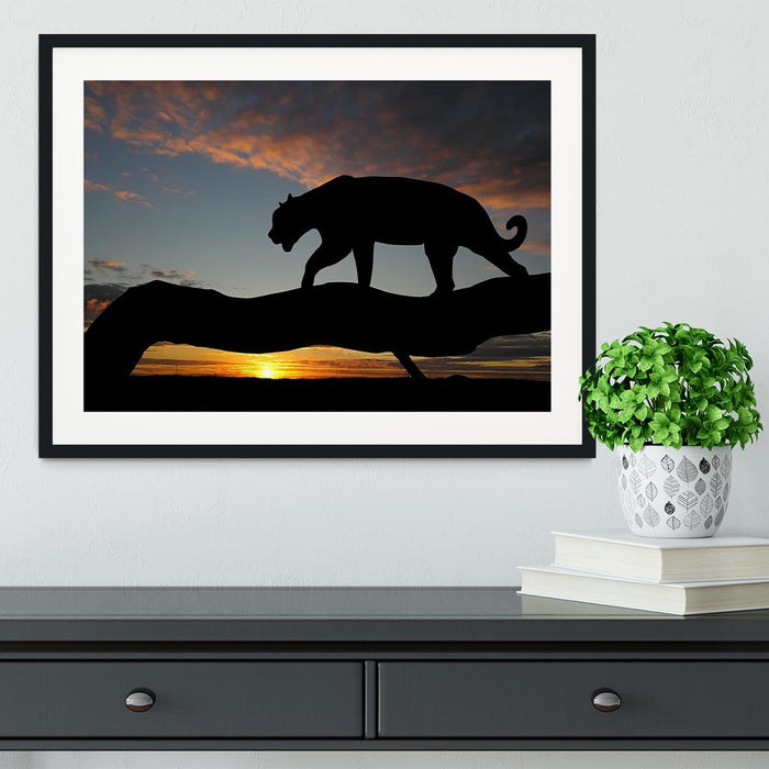 Silhouette of leopard on tree over sunset Framed Print