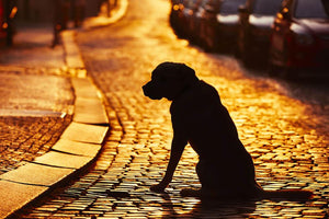 Silhouette of the dog on the street at sunset Wall Mural Wallpaper - Canvas Art Rocks - 1