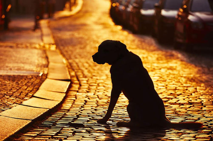 Silhouette of the dog on the street at sunset Wall Mural Wallpaper
