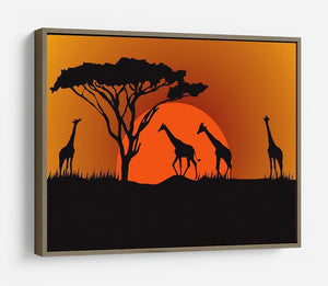 Silhouettes of giraffes in safari sunset HD Metal Print