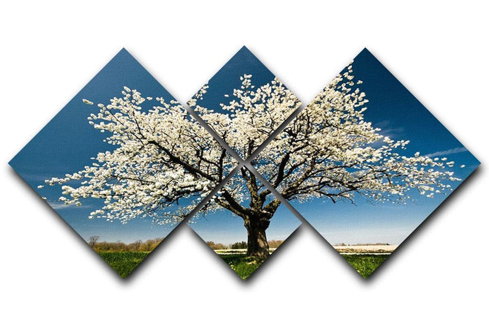 Single blossoming tree in spring 4 Square Multi Panel Canvas