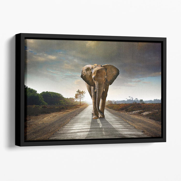 Single elephant walking in a road Floating Framed Canvas