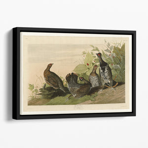 Spotted Grouse by Audubon Floating Framed Canvas