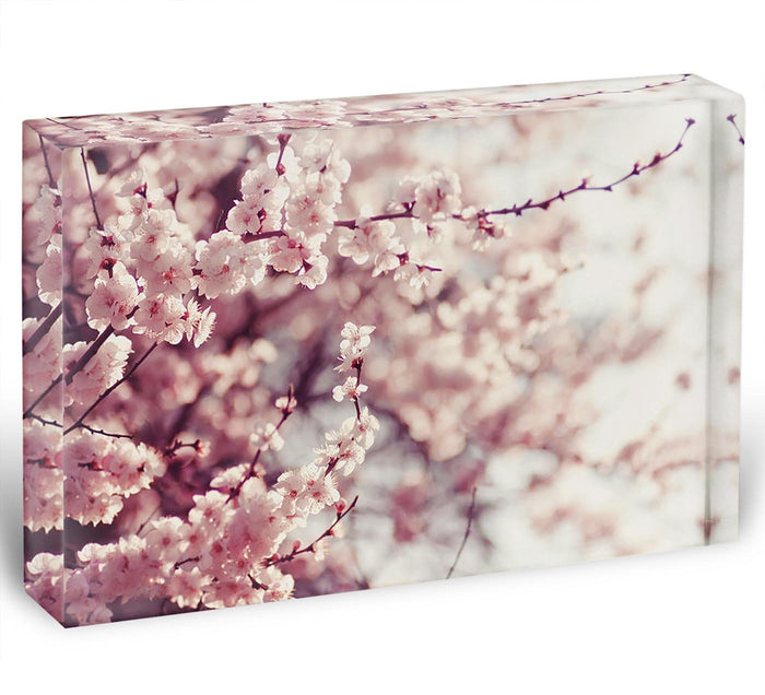 Spring Cherry blossoms Acrylic Block