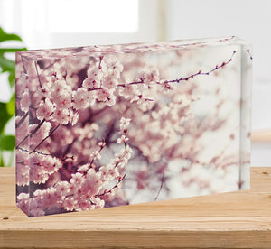 Spring Cherry blossoms Acrylic Block - Canvas Art Rocks - 2