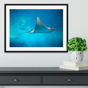 Stingray in the aquarium Framed Print - Canvas Art Rocks - 1