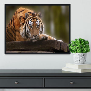 Stunning tiger relaxing Framed Print - Canvas Art Rocks - 2