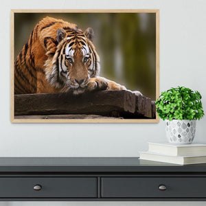 Stunning tiger relaxing Framed Print - Canvas Art Rocks - 4