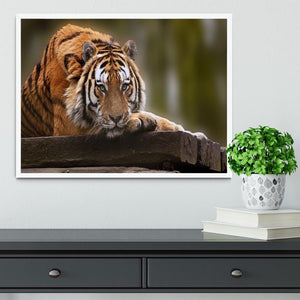 Stunning tiger relaxing Framed Print - Canvas Art Rocks -6