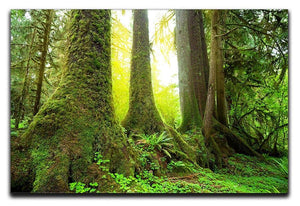 Sunny beams in forest Canvas Print or Poster  - Canvas Art Rocks - 1