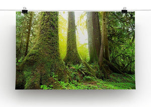 Sunny beams in forest Canvas Print or Poster - Canvas Art Rocks - 2