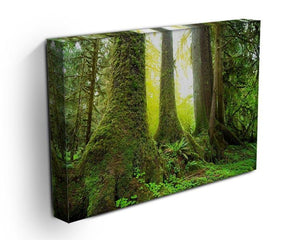 Sunny beams in forest Canvas Print or Poster - Canvas Art Rocks - 3