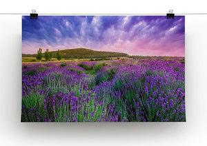 Sunset over a summer lavender field Canvas Print or Poster - Canvas Art Rocks - 2