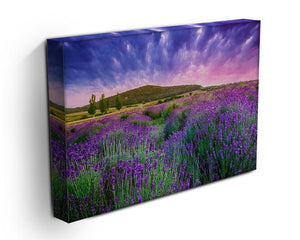 Sunset over a summer lavender field Canvas Print or Poster - Canvas Art Rocks - 3