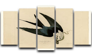 Swallow tailed Hawk by Audubon 5 Split Panel Canvas - Canvas Art Rocks - 1