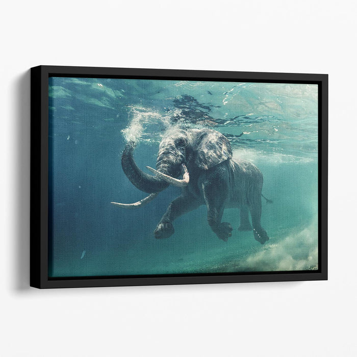 Swimming Elephant Underwater Floating Framed Canvas