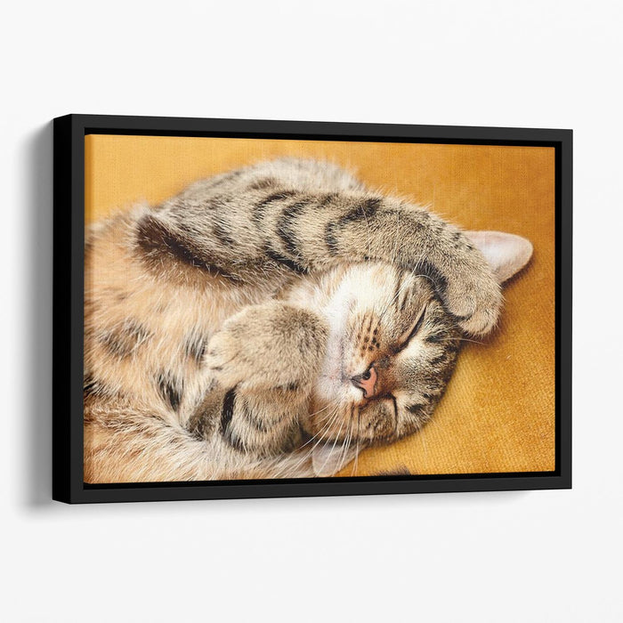 Tabby sweet sleeping on the bed Floating Framed Canvas