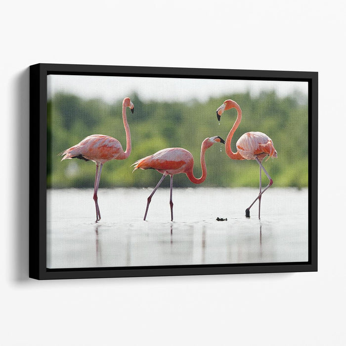 The pink Caribbean flamingo Floating Framed Canvas