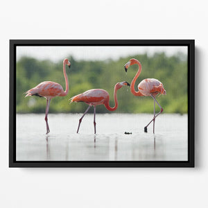 The pink Caribbean flamingo Floating Framed Canvas - Canvas Art Rocks - 2