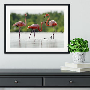 The pink Caribbean flamingo Framed Print - Canvas Art Rocks - 1