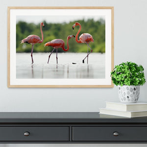 The pink Caribbean flamingo Framed Print - Canvas Art Rocks - 3